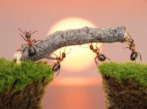 ants large