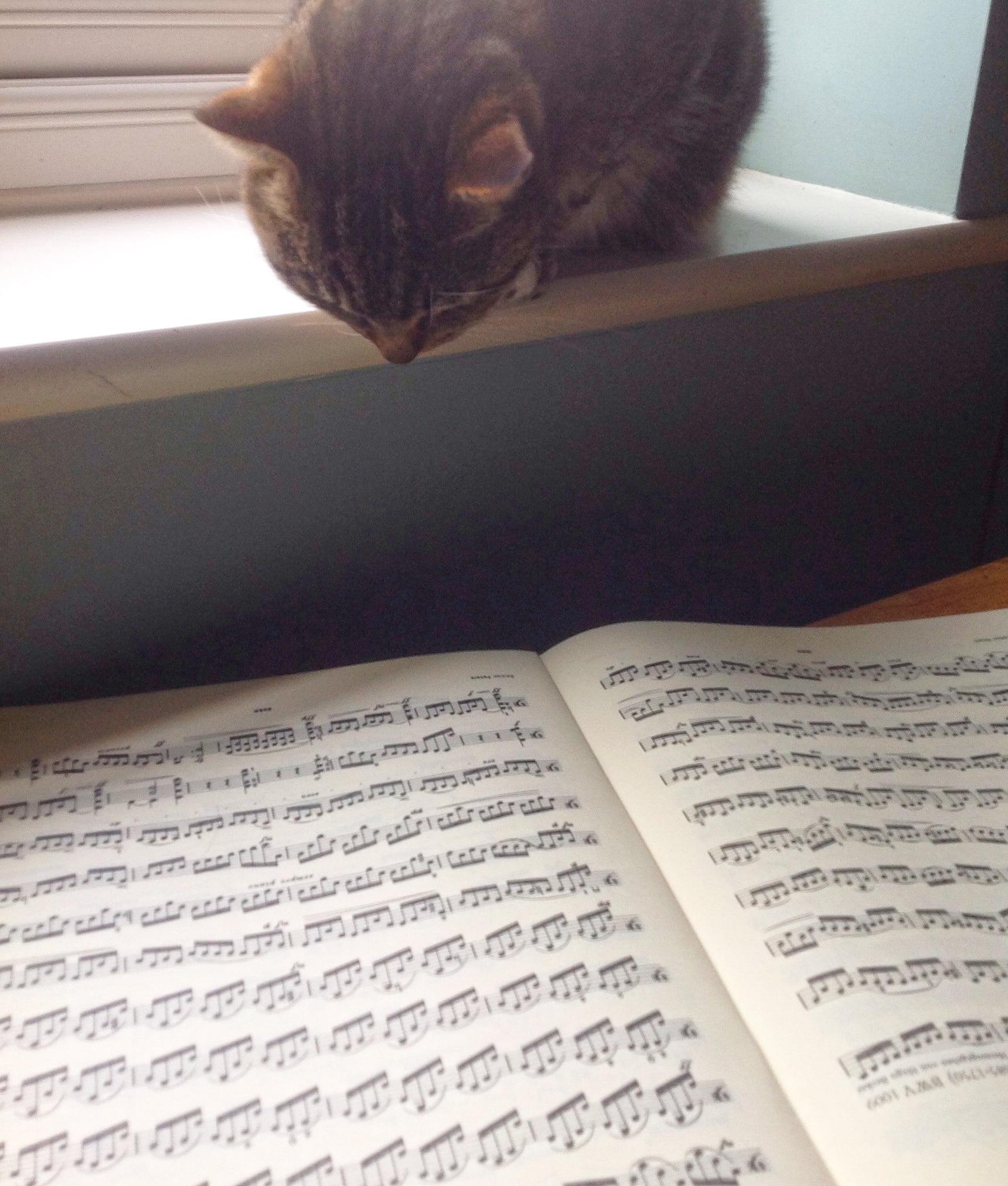 cat looking at sheet music
