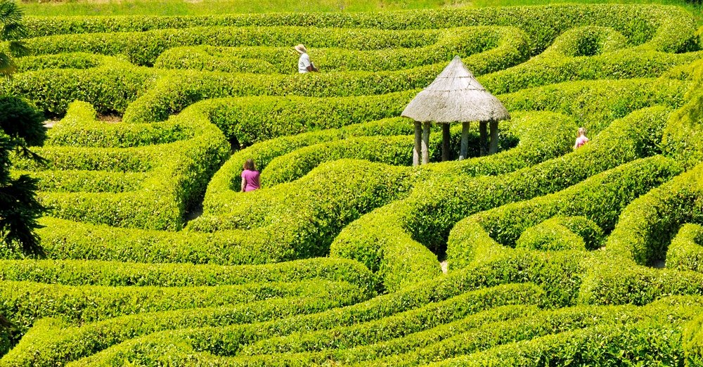 people in a maze