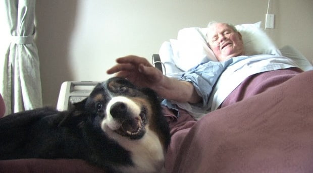 Patient with pet therapy dog edit