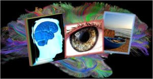 EMDR collage