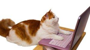cat on laptop