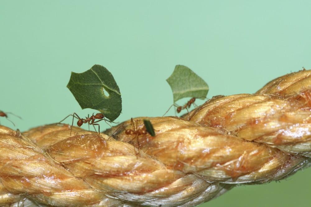 iStock_ants working_Medium