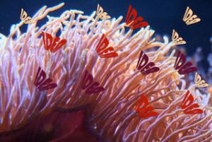 coral_compress