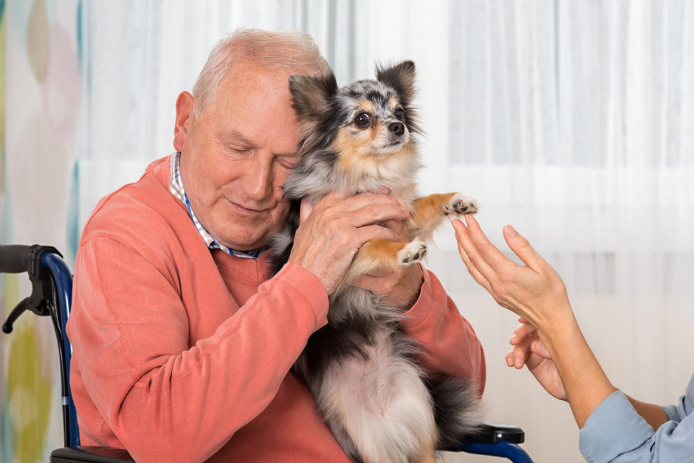 Pet Therapy – Senior man with a little dog, Chihuahua